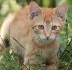 Natural Kennel Cough Treatment For Cats
